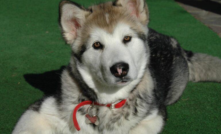 Aprobado en segundo debate Proyecto de ley que crea cédula animal