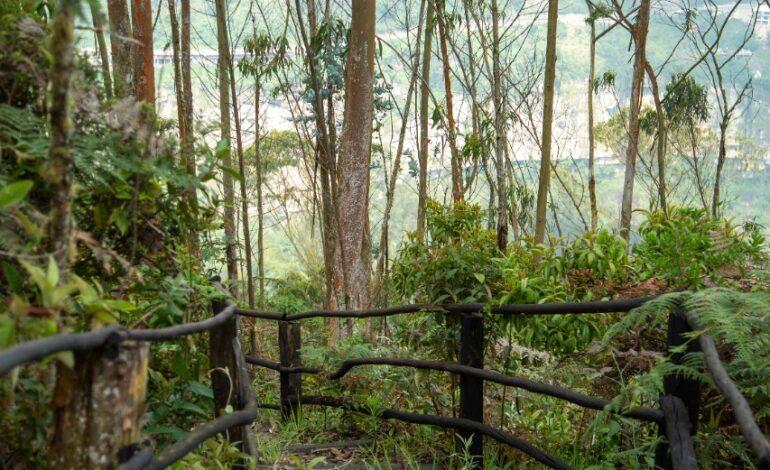 Bogotanos vuelven a disfrutar de los cerros