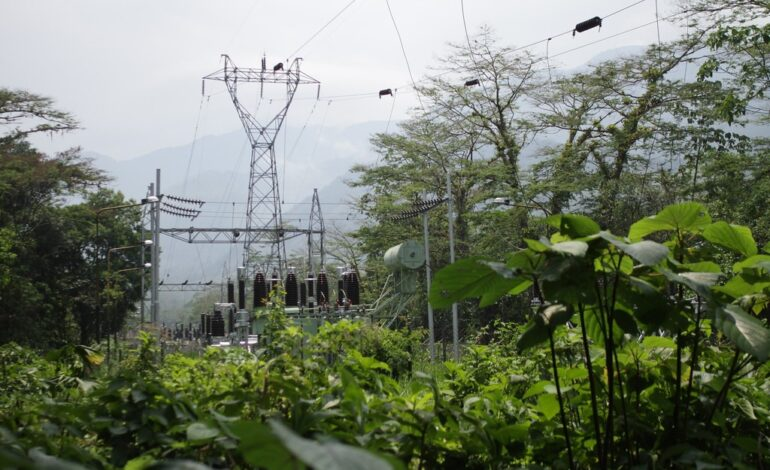 ENEL-Codensa moderniza sus redes eléctricas para proteger la fauna silvestre